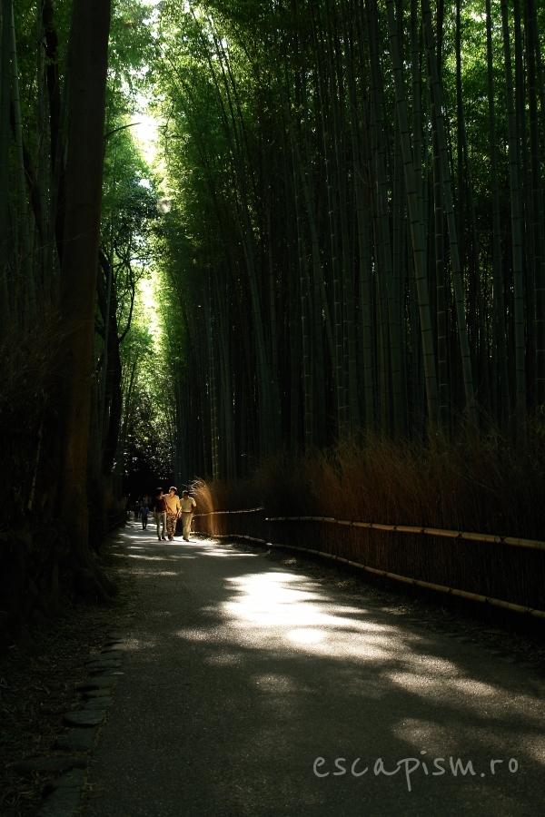 arashiyama padure bambus kyoto