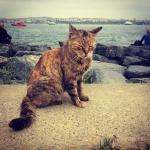 pisica istanbul bosfor