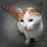 pisica istanbul strada 4