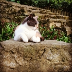pisica uskudar istanbul