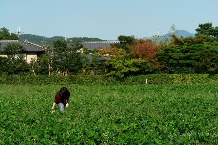 scena rurala kyoto