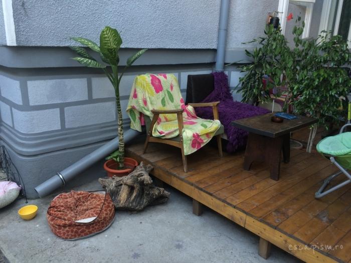 cafeneaua miau bucuresti exterior 5