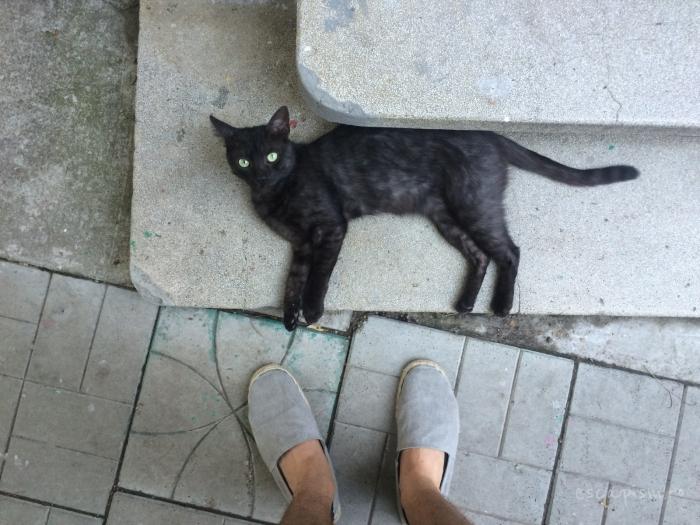 cafeneaua miau bucuresti exterior pisica