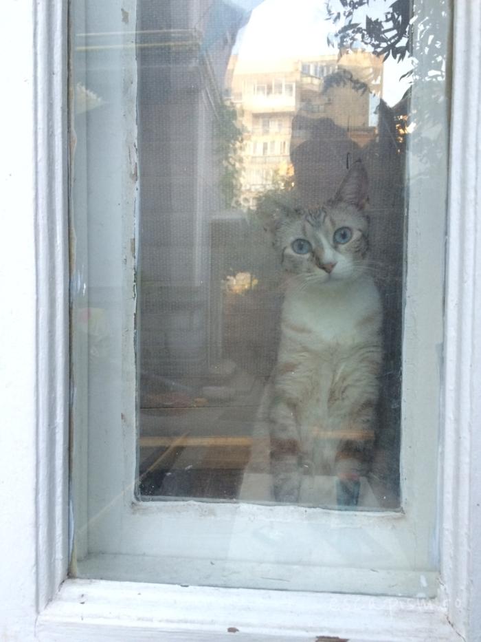 cafeneaua miau bucuresti interior pisica 6