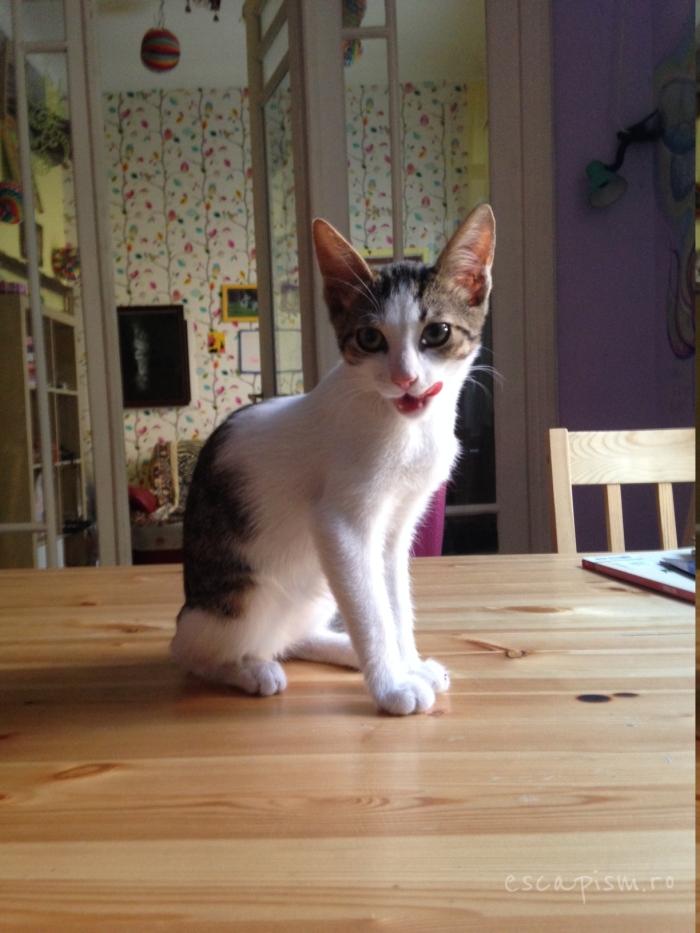 cafeneaua miau bucuresti interior pisica 7