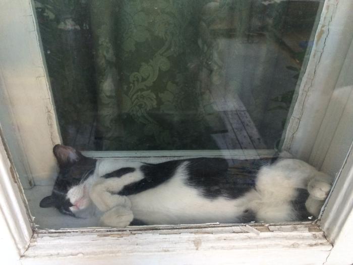 cafeneaua miau bucuresti interior pisica