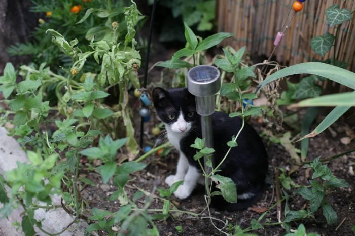 pisica cafeneaua miau 2