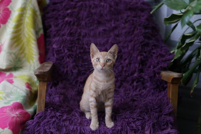 pisica cafeneaua miau 3