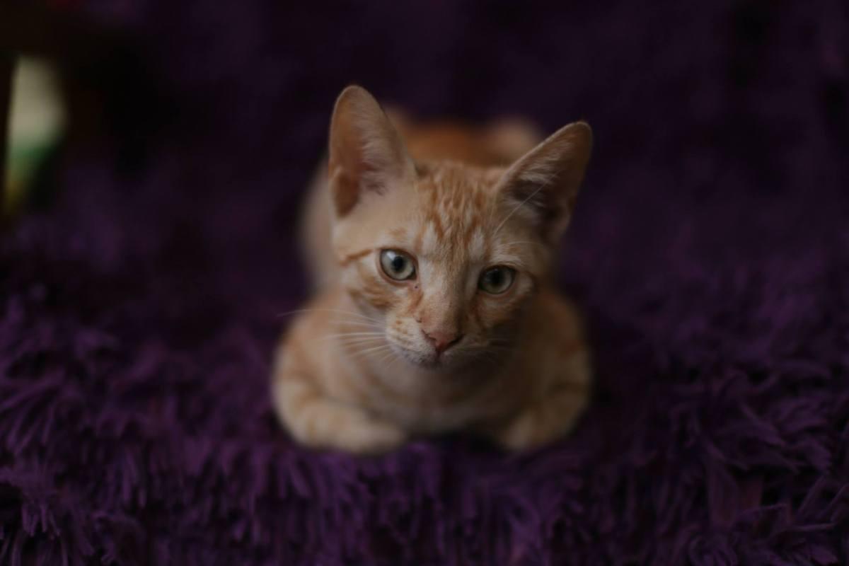 Miau: cafeneaua secreta a iubitorilor de pisici