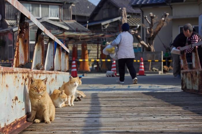 Aoshima-insula-pisicilor-Japonia