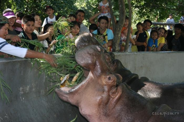 Bangkok-Zoo