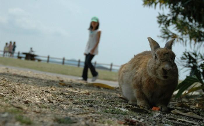 Okunoshima-insula-iepurilor-Japonia (2)