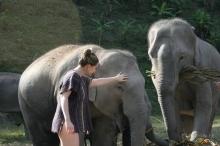 Sanctuar-elefanti-Diana