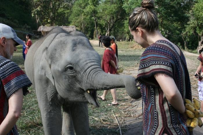 Sanctuar-elefanti
