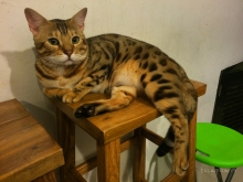 Catmosphere-Cafe-Chiang-Mai-Ace-Chair-3