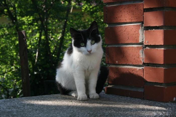 pisica-Buyukada-Istanbul-strada-12