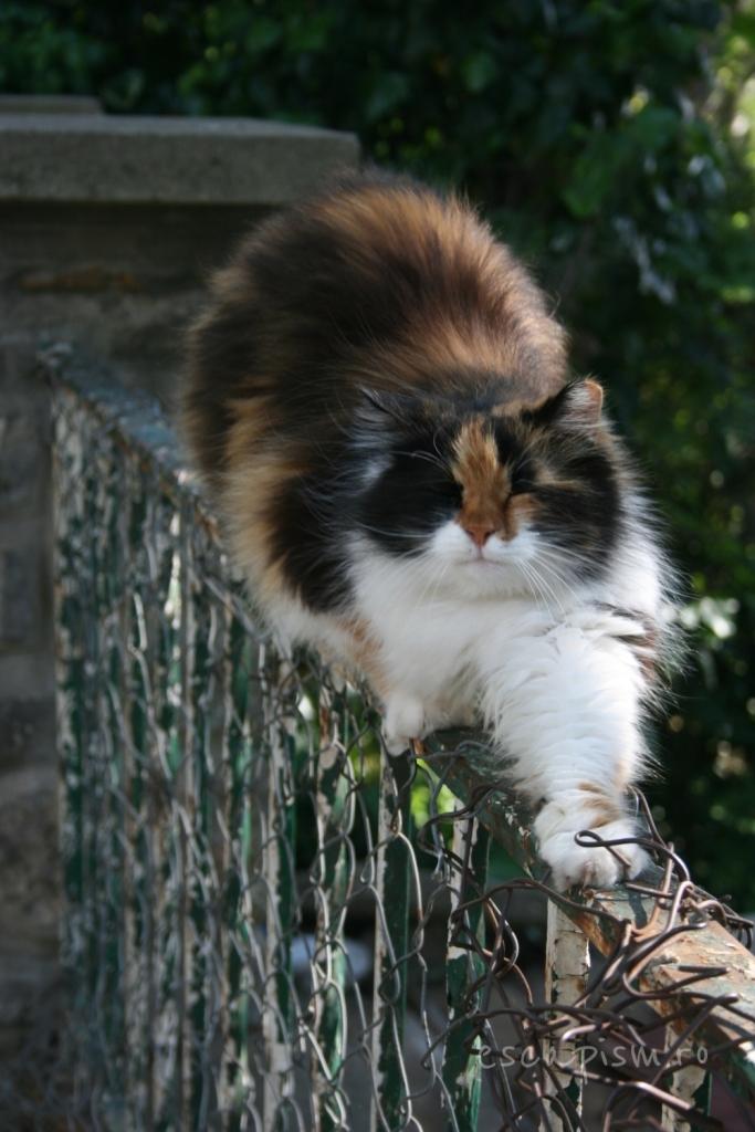 pisica-Buyukada-Istanbul-strada-13