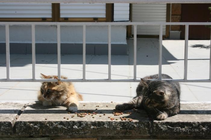pisica-Buyukada-Istanbul-strada-17