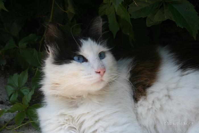 pisica-Buyukada-Istanbul-strada-23