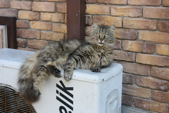 pisica-Buyukada-Istanbul-strada-24
