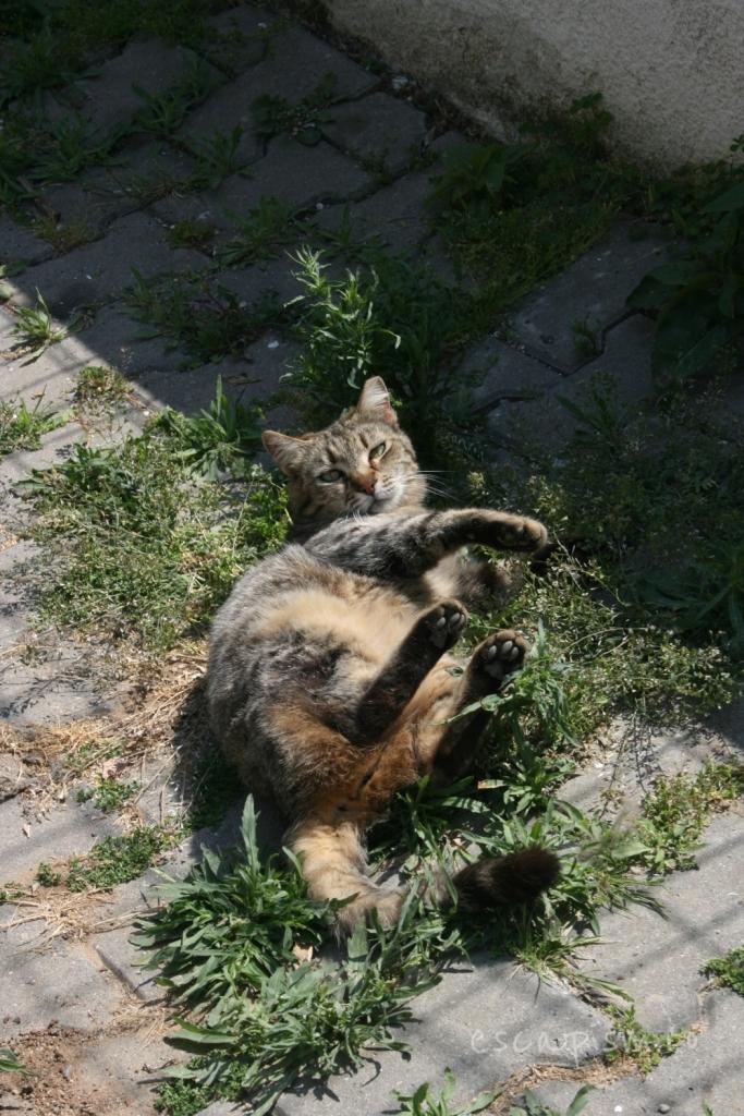 pisica-Buyukada-Istanbul-strada-7
