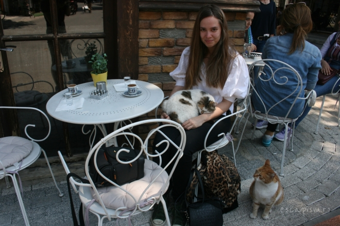 pisica-Buyukada-Istanbul-strada-Diana-masa-cafenea