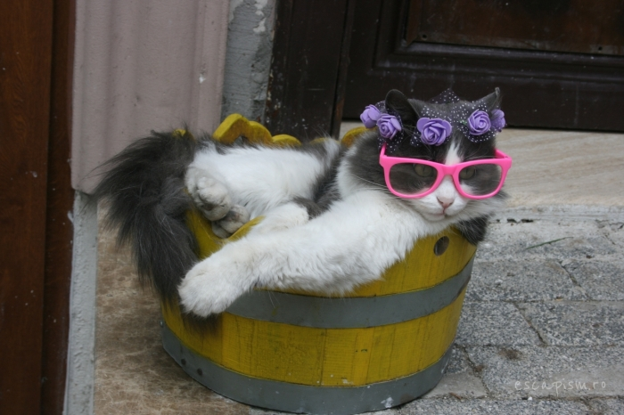 pisica-Buyukada-Istanbul-strada-ochelari-soare