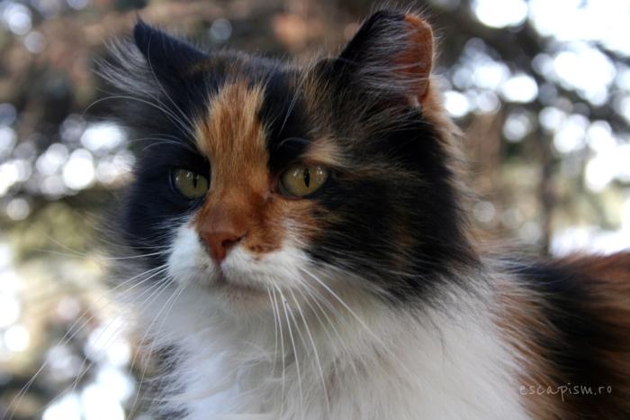 pisica-Buyukada-Istanbul-strada