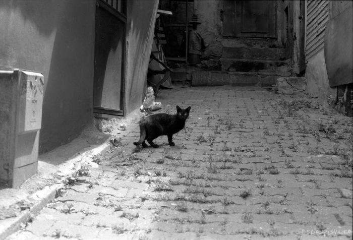 istanbul-black-cat-street