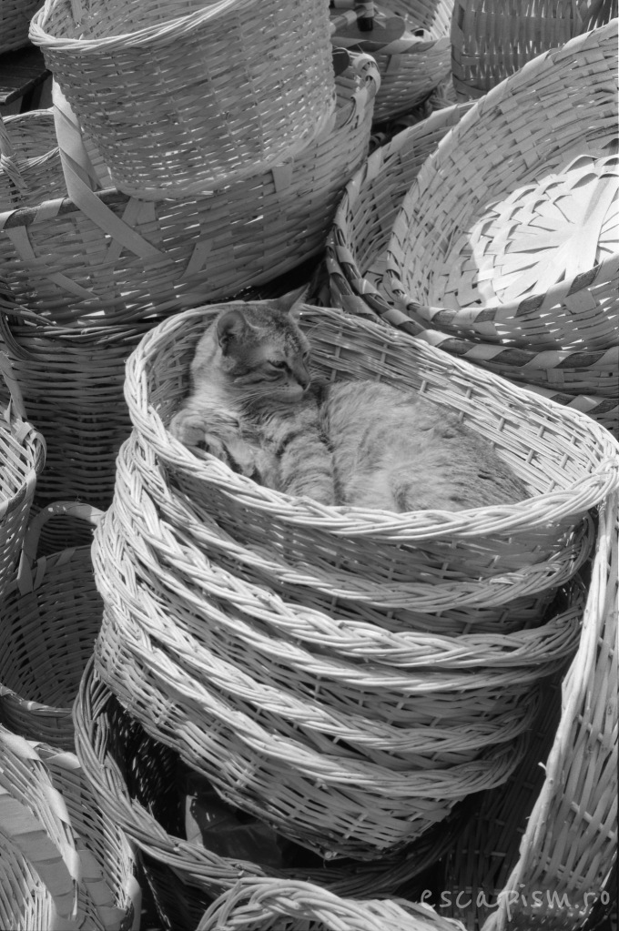 istanbul-cat-bazar-baskets