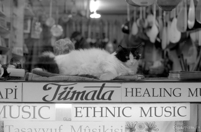istanbul-cat-window-2