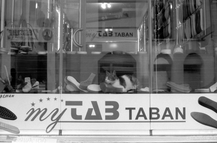 istanbul-cat-window-3