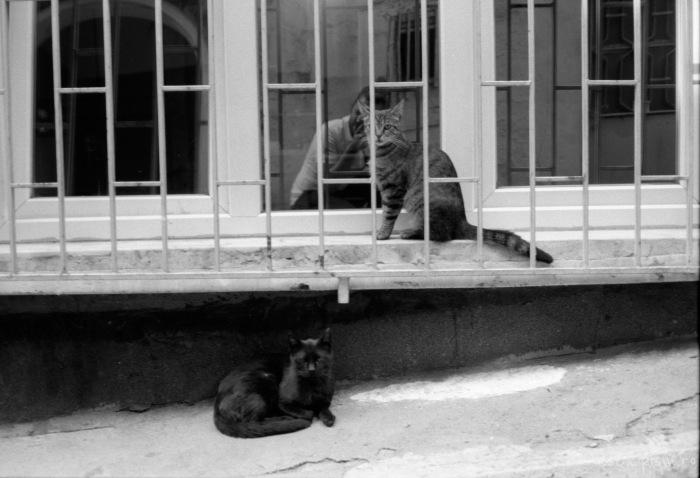 istanbul-cats-selfie-window