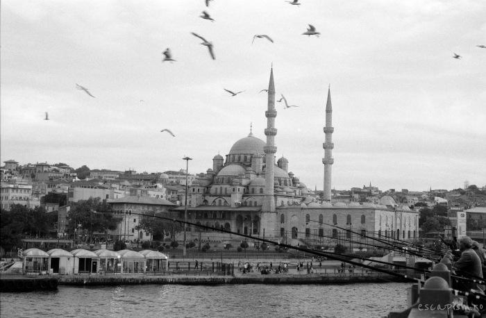 istanbul-eminonu-seagulls-2