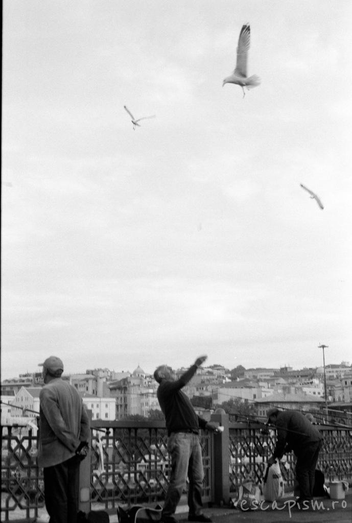 istanbul-feeding-seagulls-galata-bridge-3