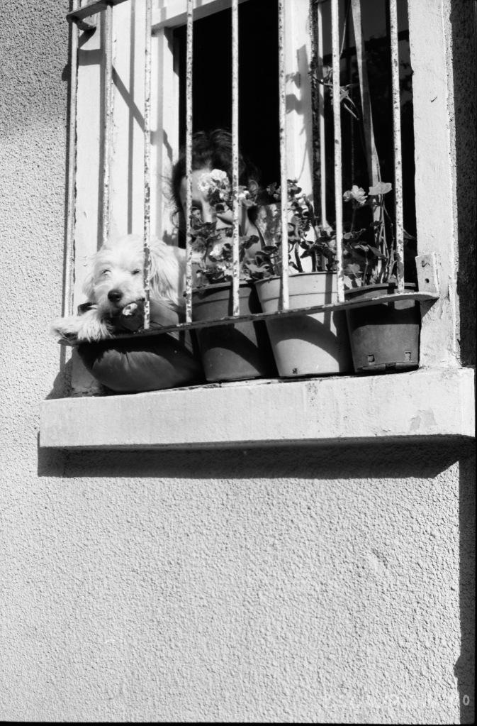 istanbul-woman-window
